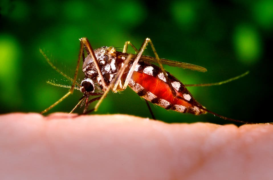 16258-a-mosquito-feeding-on-a-human-finger-pv