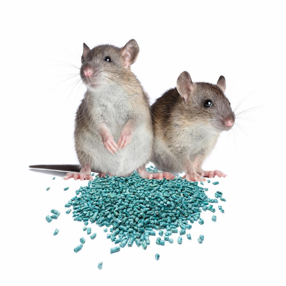 rat pellets